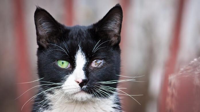 Und mit kopf katze augen wackelt Brauche dringend